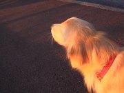 Dog Imitates Sirens