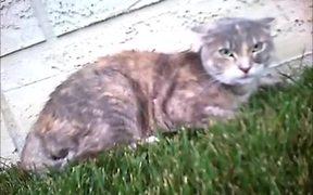 Cat Cam Cat Fight