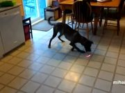 Animals Chasing Laser Pointers