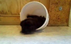 A Kitten Trap