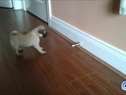 Puppies Vs Door Stoppers