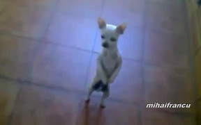 Dogs Acting Like Humans