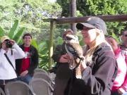 Kookaburra Call