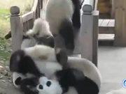 Pandas On Slides