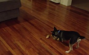 Adorable Puppy And Bone