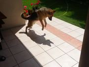Dog Vs Shadow