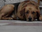 Sad Dog Diary