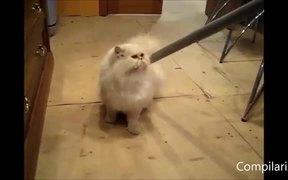 Cats Vs Vacums