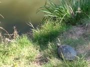 Epic Turtle Jump