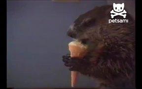 Woodchuck Eating Ice Cream
