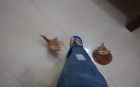Kittens Climbing