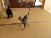 Flying Ninja Kitten