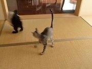 Flying Ninja Kitten
