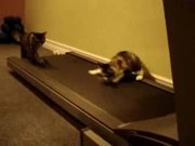 Cats On Treadmill