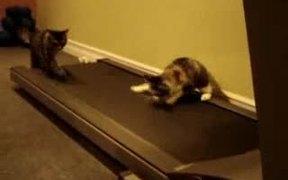 Cats On Treadmill
