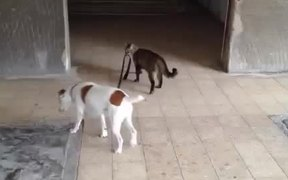 Cat Walks Dog Home