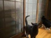 Machine Gun Knocker Cat