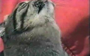 Cat Vs Jaws