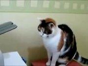 Cat Printer Repair