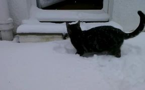 Cat Vs Snow First Time