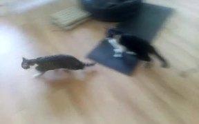 Funny Cat Part 2
