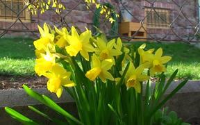 Awaiting Spring