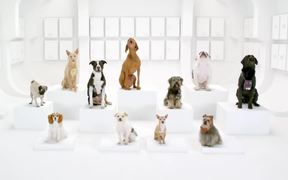 Volkswagen Commercial: The Bark Side