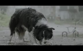 Kaunas IFF Commercial: The Dog