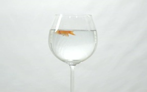 Goldfish Swimming in Wine Glass