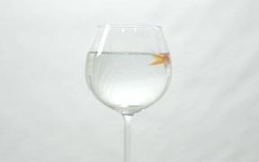 Goldfish Swimming in Wine Glass