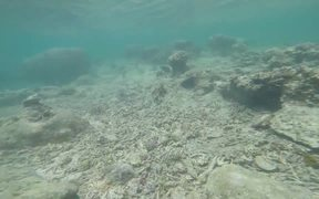 Tropical Fishes while Snorkelling in Uganzaki