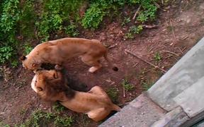 Never Wake A Sleeping Lion