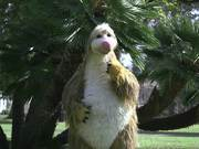 Snook the Sloth at Santa Barbara's Earth Day