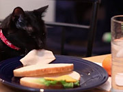 Meowbox Commercial: Keep Them Busy