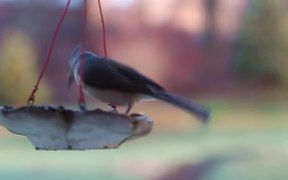 Birds and Feeder in Macro View