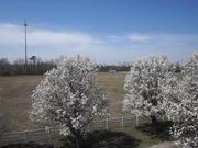Virginia Springtime