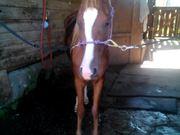 Seraph after a Bath
