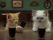 Jake O'Connor's: A Kitten Walks into a Bar