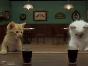 Jake O'Connor's: A Kitten Walks into a Bar - Yarn