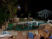 Farmers Insurance Commercial: Stag Pool Party