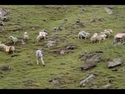 Kayak Commercial: Sheep Happens