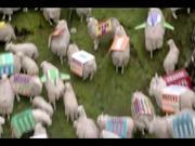 Kayak Commercial: Sheep Happens