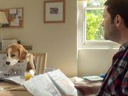 Beagle Street Commercial: Jeremy the Beagle