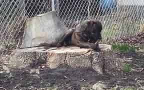 Dog & Stick