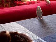 Sneaky Birds