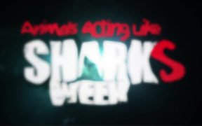Revision3 Video: Animals Acting Like Sharks Week