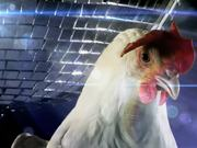 Samsung Galaxy Commercial: Tab Disco Chicken