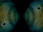 Aesthetic Species Maps