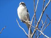White Cute Little Bird