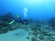 Loggerhead Turtle Cuddles a Diver